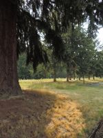 Near the vedder river~8/22/2014~6 by Mathayis