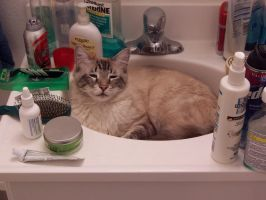 sink full of cat by Caldonianogre