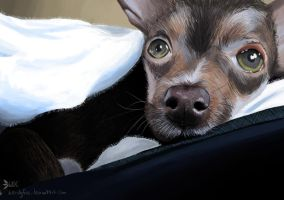 Lucky the Puppy by WendyFae