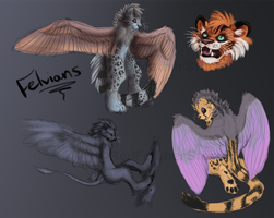 Felvians concept page - Commission by DrizzleSnow