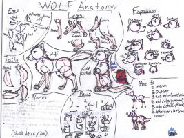 Wolf Anatomy by shadowfire88123