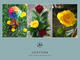 Rose Pack by LilyStox