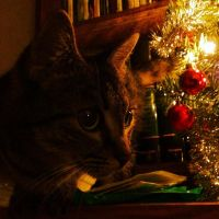 The Cat Who Stole Christmas Part 2 by ToxiClean