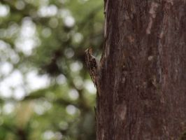 be a prey to a treecreeper by pagan-live-style