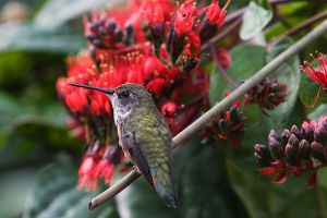 Hummingbird in Paradise by secondclaw