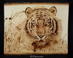 Tiger - wood burning by brandojones