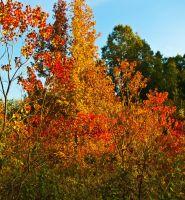 Mississippi Fall Color 3 by texasghost