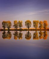 Mirror Trees by Justine1985