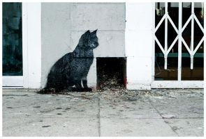 Cat On Melrose by makepictures
