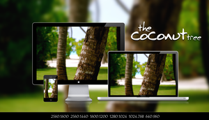 The Coconut Tree by 99xpress