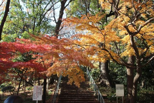 Fall Maples in Ueno Park by OTLProductions