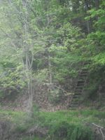 natures' stairway by theDevineartist