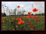 Poppy Field by Twins72