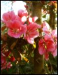 Sweet Pinks by Forestina-Fotos