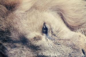 Old King Sleeping by Joleisha