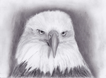 Eagle Sketch by leafpoolfanXD