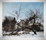 New winter for old apple tree by VesnaRa14