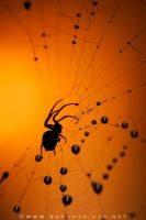 Spider + Sunset 1 by lovablepsycho