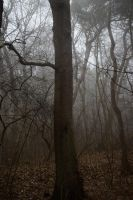 Fog in the forest 3 by Risandell