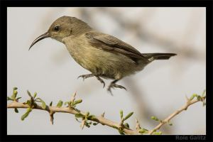 HOP by RoieG