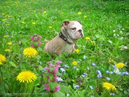 Doggy in a spring meadow by love1008