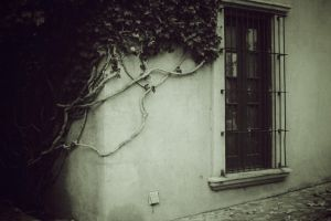 vines by h20baby93