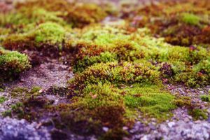 place - 021 Moss by thalija-STOCK