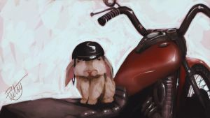 Rabbit on a Motorcycle by pictsy
