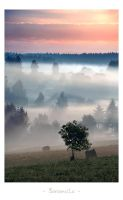 - Foggy morning - by UNexperienced