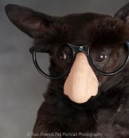 Chihuahua as Groucho Marx by planet0