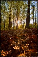 Autumn on ground by JoInnovate