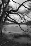 Tree Over the Water by FrodiusMaximus