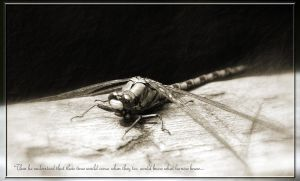 I wonna ride a dragonfly by CompleoOrexis
