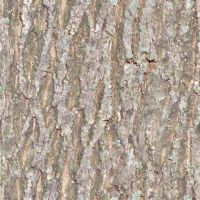 seamless tiled bark texture by lendrick