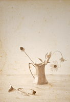 Pitcher with flowers by myrnajacobs