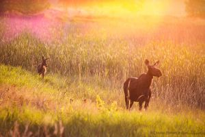 Moose by diantc333