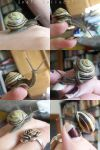 Snail Collection by BlackSkull666