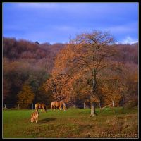 Last day of Autumn by allym007