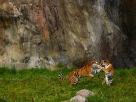 Catfight by Photopathica
