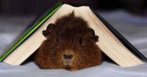 Guinea Pig versus Harry Potter by charlielover