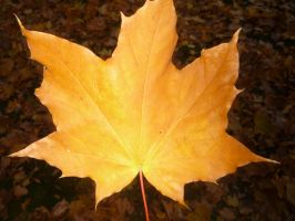 . Autumn leaf by AndreeaAtena
