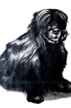 Charcoal Drawing of a Doggy by Ranbooby