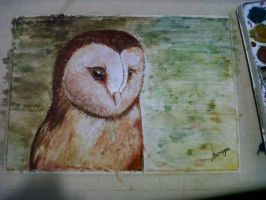 Owl watercolor by Picassita