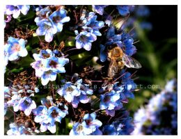 Between Flower Insects by Sitara-Amaris