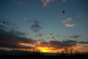 Sunset and birds by steppelandstock