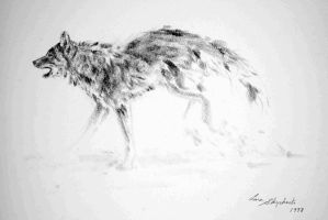Gray wolf running by Lara-Shychoski