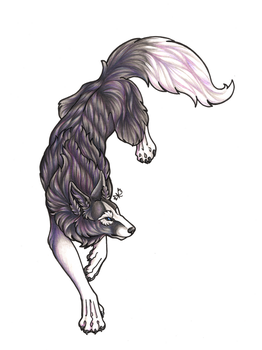 :Black and White Wolf Stepping Down: by Ashenee