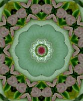 Rose bud kaleidoscope by Tailgun2009