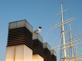 Seagull 2 by Inilein