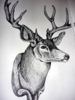 bambi by cainess